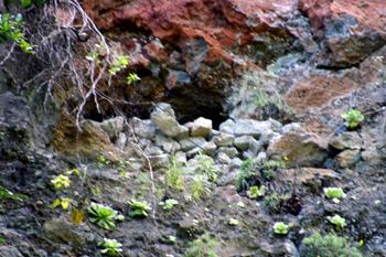 Cave in the ravine wall at Cubo de La Galga, Puntallana.