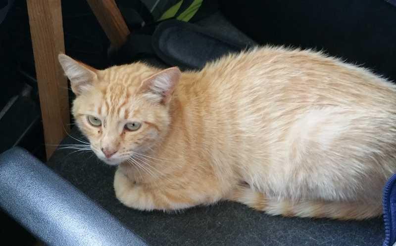 Sweet ginger cat