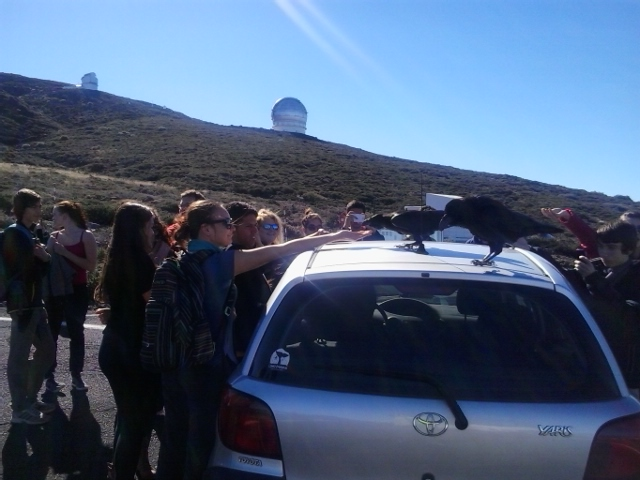 Ravens on the roof of a car begging for food while lots of people take photos, Roque de Los Muchachos, La Palma