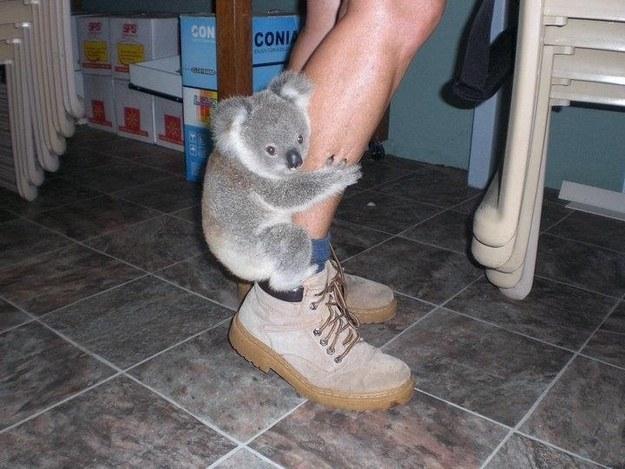 koalaFoot