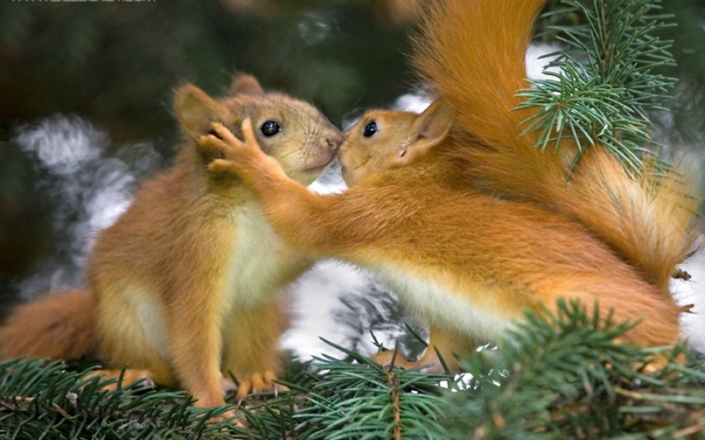 Squirrel-Love-1024x640