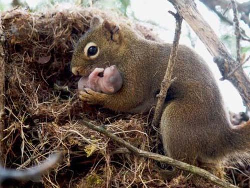 squirrelMumBaby