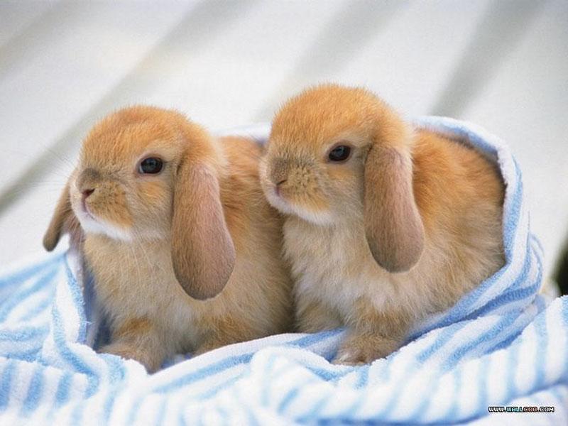 Image of: Giving Birth 2babyrabbits800 Sheila Crosby Squee Sunday Baby Rabbits Sheila Crosby