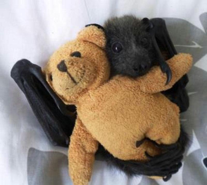 Baby bat ith its teddy bear.