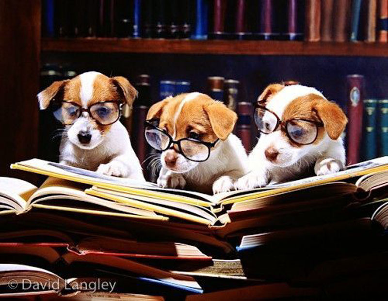 readingdogs