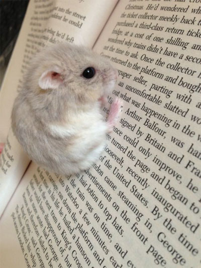 readingmouse