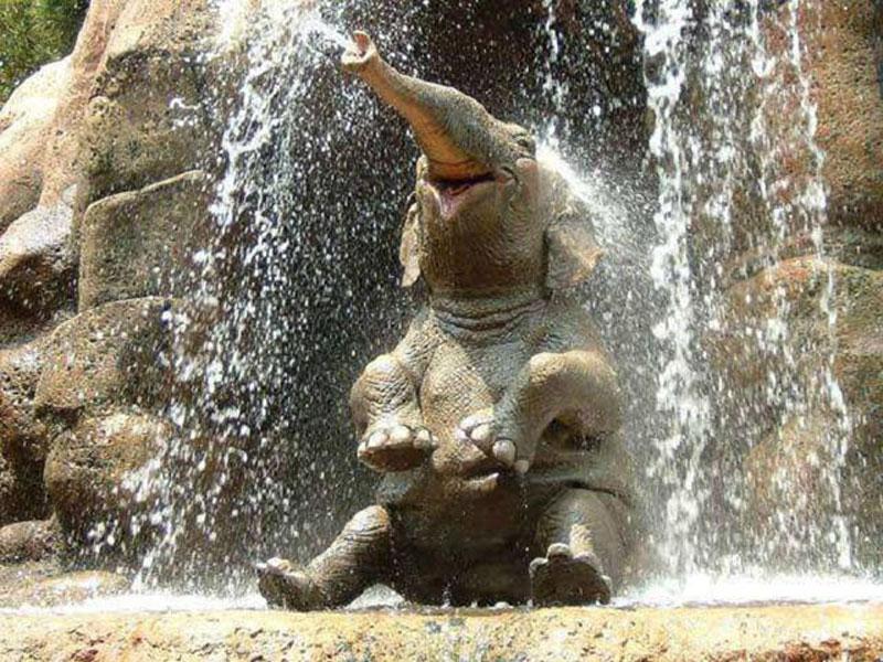 elephantshower