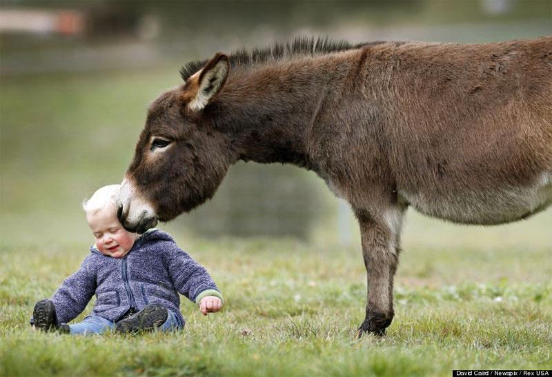 DonkeyKid