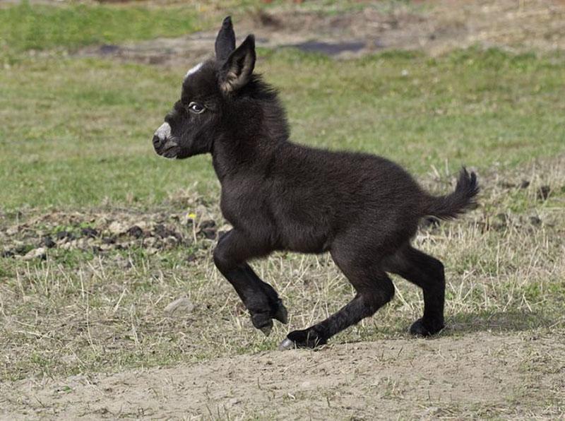 DonkeyRunning