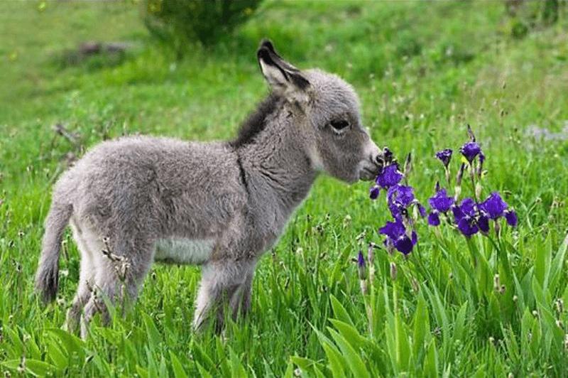 DonkeySmelling