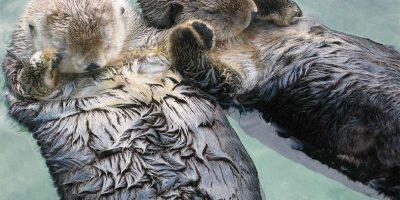 OtterHands