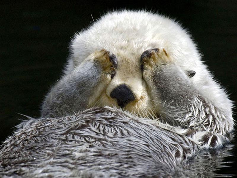 OtterMonday