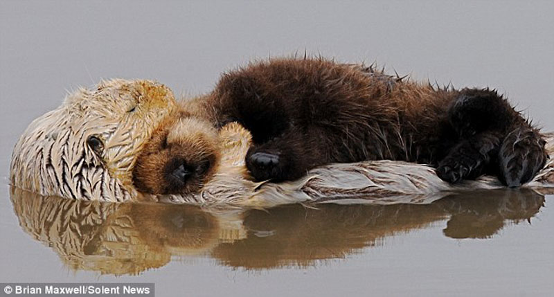 OtterMum