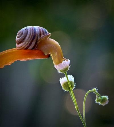 snail3a