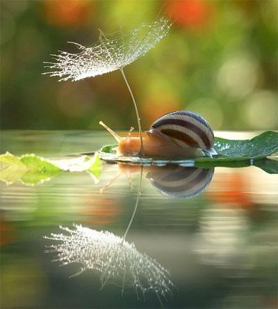 snail3b