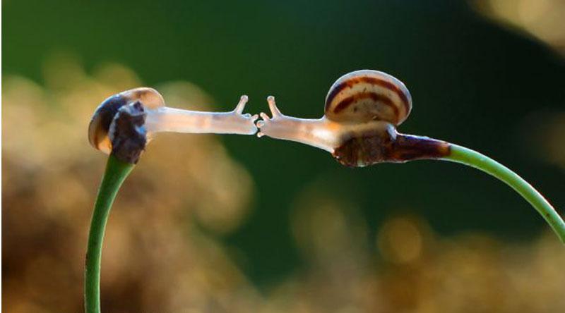 snail4
